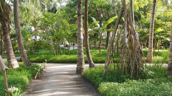 Kuramathi Island Resort: Grounds - Beachvillas (June 2012)