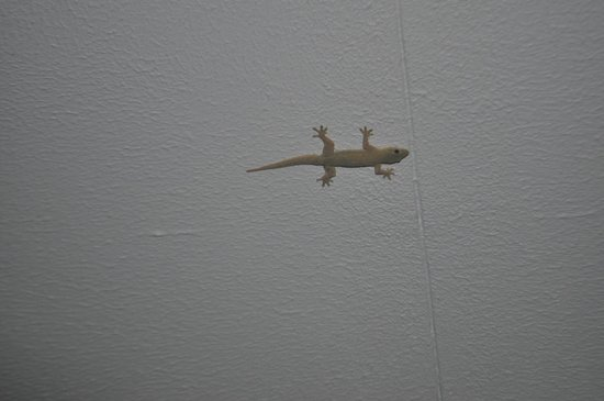 Holiday Inn Phuket Mai Khao Beach Resort:                   Mister Gecko)