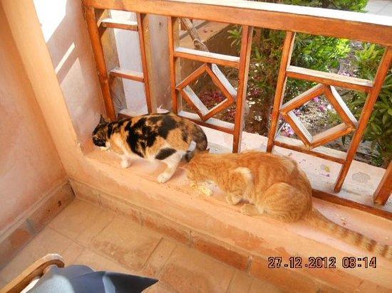 Hotel Sultan Bey Resort: unsere katzen die uns tgl besuchten