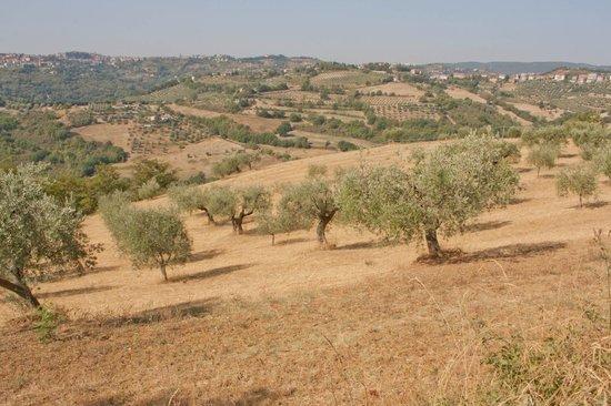 Agriturismo San Felicissimo:                   uitzicht