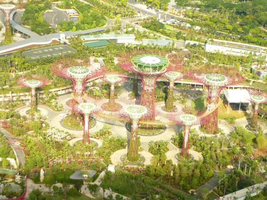 Supertree Grove Aerial View Picture Of Marina Bay Sands Skypark Singapore Tripadvisor