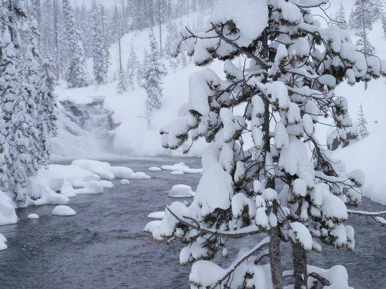 Winter Wonderland Picture Of Old Faithful Snowmobile Tours Day Tours Jackson Tripadvisor