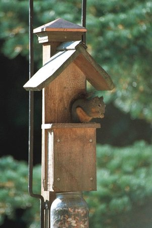 Otters Pond Bed and Breakfast : Squirrel at the feeder on the deck