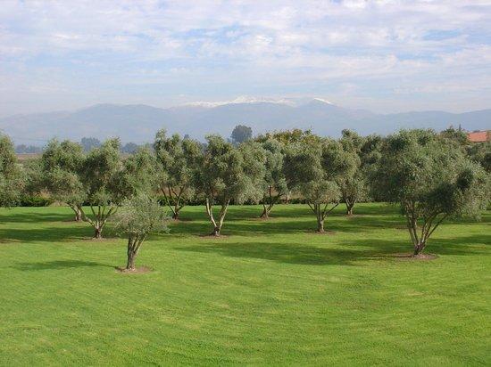 Pastoral Hotel - Kfar Blum: Back yard views