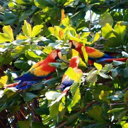 Hotel Fuego del Sol:                   macaws flew in every afternoon to eat off almond trees. lots of wildlife.