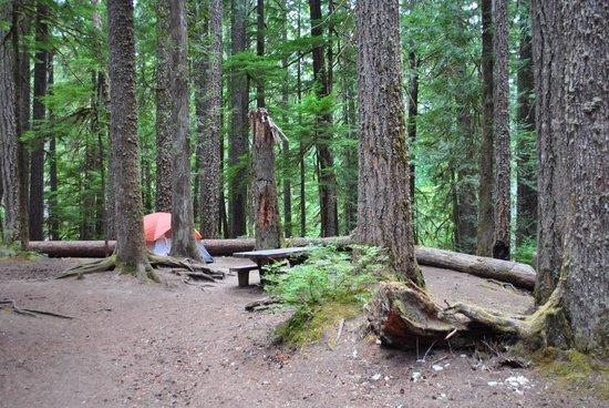 Ohanapecosh Campground : Site D008