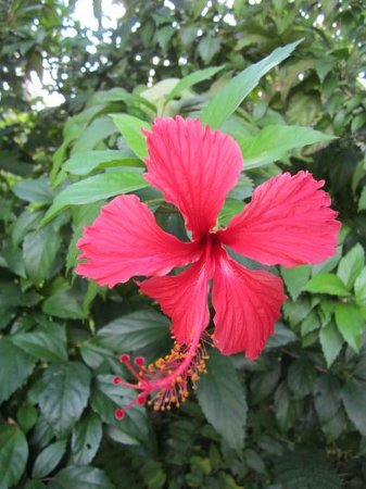 Chalet Tropical Village: The flowers are so tropical and gorgeous!!