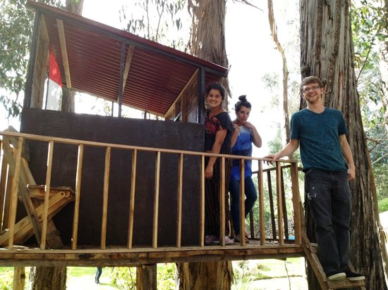 Cusco Cottages:                   Treehouse in the huge backyard