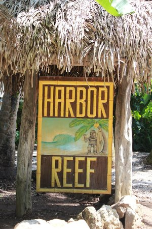 Harbor Reef Surf Resort:                   Hotel