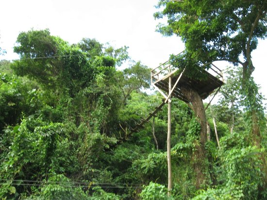 Jungle Top Zipline Adventure:                   First View of the Platforms