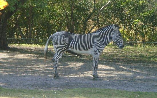 Zoo Miami: 33