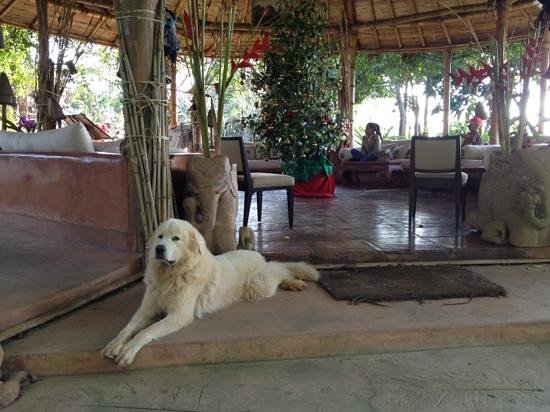 Phu Chaisai Mountain Resort:                   Dog lovers appreciated