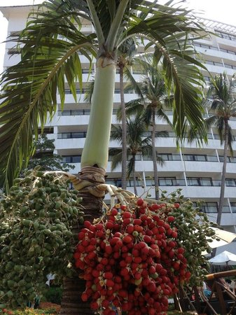 Hyatt Ziva Puerto Vallarta: Scenery