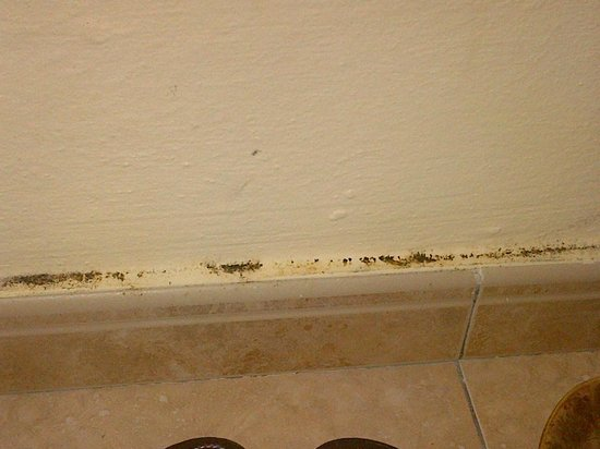 Hotel Riu Vallarta:                   Mould in closet
