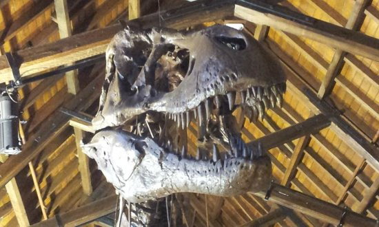 Australian Fossil and Mineral Museum:                   Smile for the camera