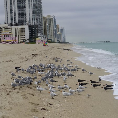 Haulover Beach Park: colder day at the beach
