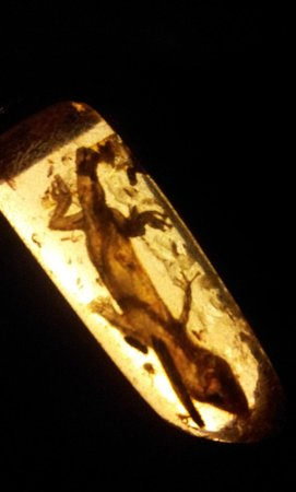 Australian Fossil and Mineral Museum:                   Preserved in amber forever
