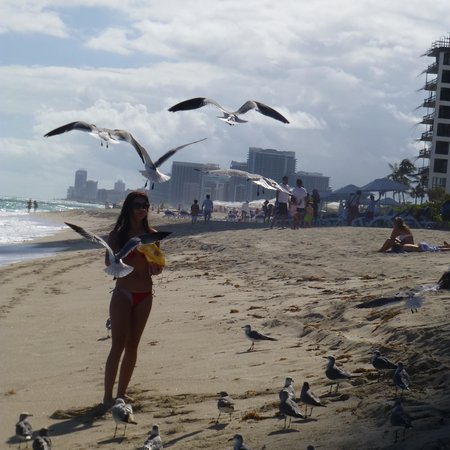 Bal Harbour, FL: feeding the birds