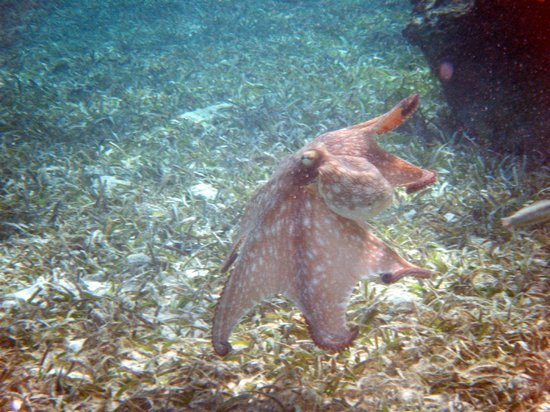 Paradise Cove :                   Our buddy Octo!