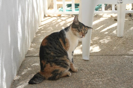 Hotel Flores: One of the two cats that visited for a rub