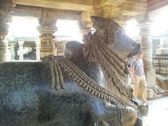 Halebid, Indien:                   nandi