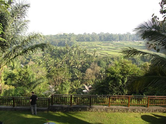 The Samaya Bali Ubud: View from the Lobby