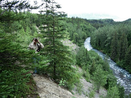 Alaska ATV Adventures:                   Bob looking for bears