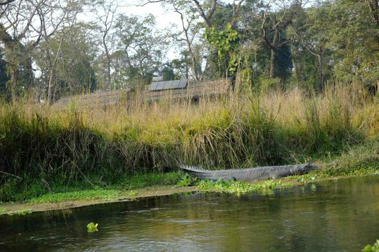 Hotel Parkside:                   the croc we saw on the afternoon boat ride