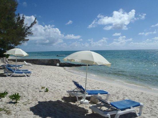 Astroea Beach Hotel:                   the beach