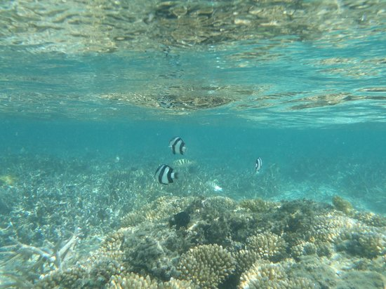 Astroea Beach Hotel:                   Snorkelling at the beach