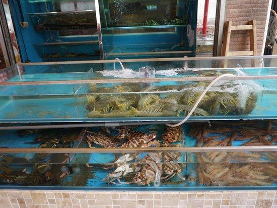 เกาะหล่ามา: seafood restaurants
