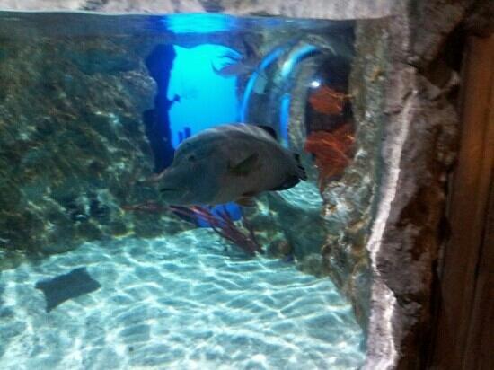 fascinating photo de aquarium sea val d europe marne la vall 233 e tripadvisor