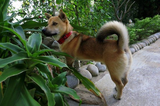 Haven Vietnam: Haven the extremely well-behaved dog