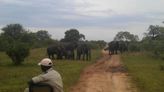 Kapama Southern Camp:                   meet the elephants