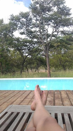 Kapama Southern Camp:                   pool amidst the bush