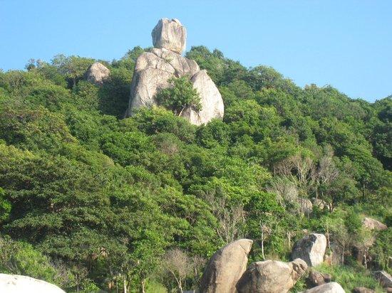 شرم شوري فيلدج:                   buddha                 