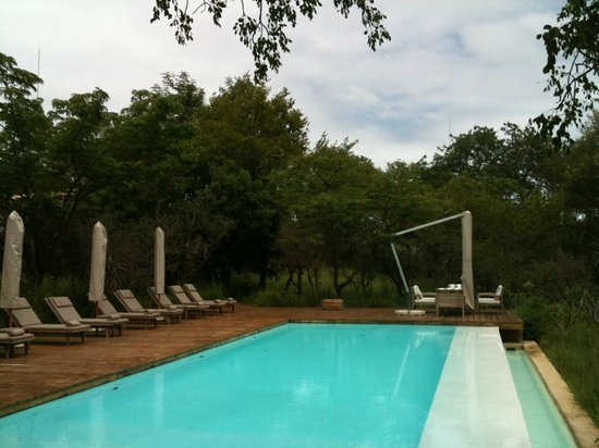 Kapama Southern Camp:                   poolside, view from bar