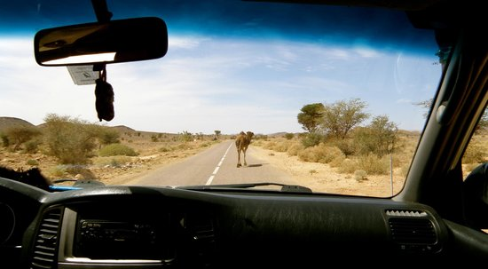 Morocco Sahara 4x4 - Day Tours: In the midle of the Road