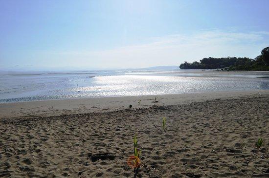 Hotel Hibiscus Garden : La plage