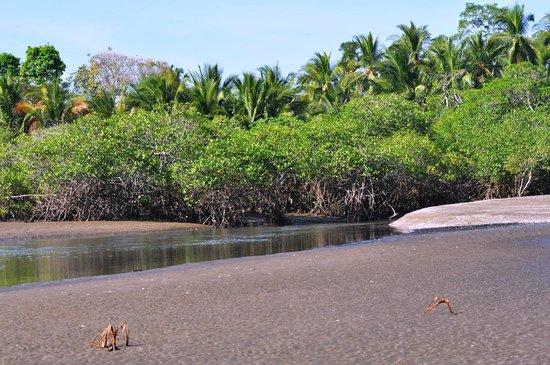 Hotel Hibiscus Garden : La mangrove