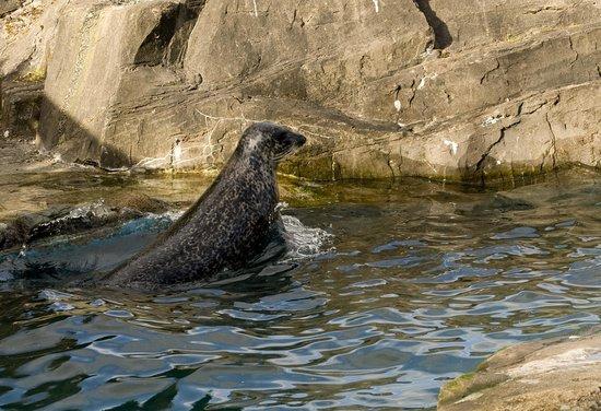 The Scottish SEA LIFE Sanctuary: fotograf?a de The Scottish SEA LIFE ...
