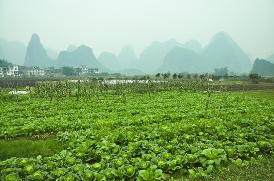 Yangshuo Village Inn:                   Countryside of Yangshuo