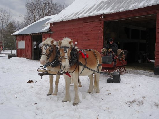 Circle B Ranch: Owner Chris and the team with sleigh.