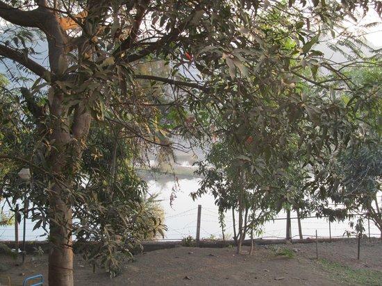 Lotus Riverside Resort:                   The river