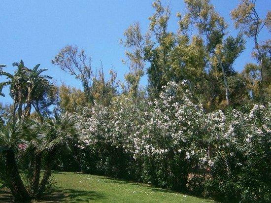 Club Med Kamarina: Wunderschöne Bäume und Pflanzen