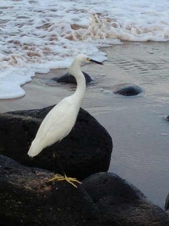 Mar de Jade Retreats Wellness Vacation:                   Egret. Look at those great yellow feet!