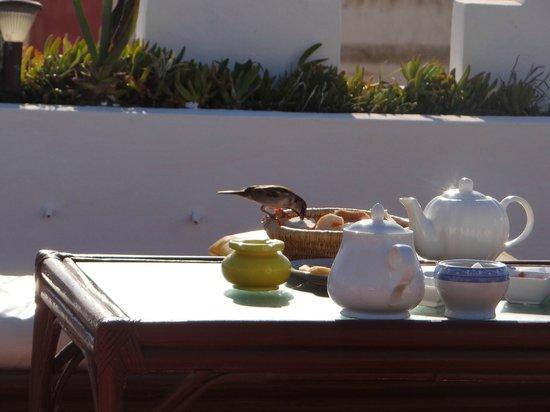 Les Terrasses d'Essaouira: l'oiseau qui a finis le reste de notre petit dejeuné(un moment inoubliable)