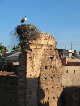 Adam Park Marrakech Hotel  & Spa: Stork at the Kasbah