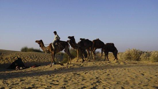 Sagar Guest House : Camel driver