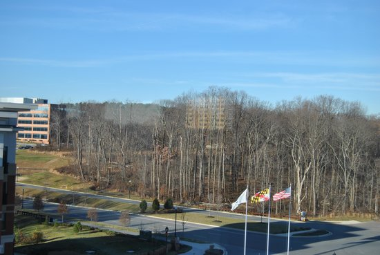 The Hotel at Arundel Preserve: view from room